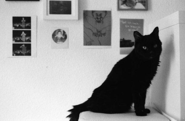 Pussycat è un'anziana gattina
