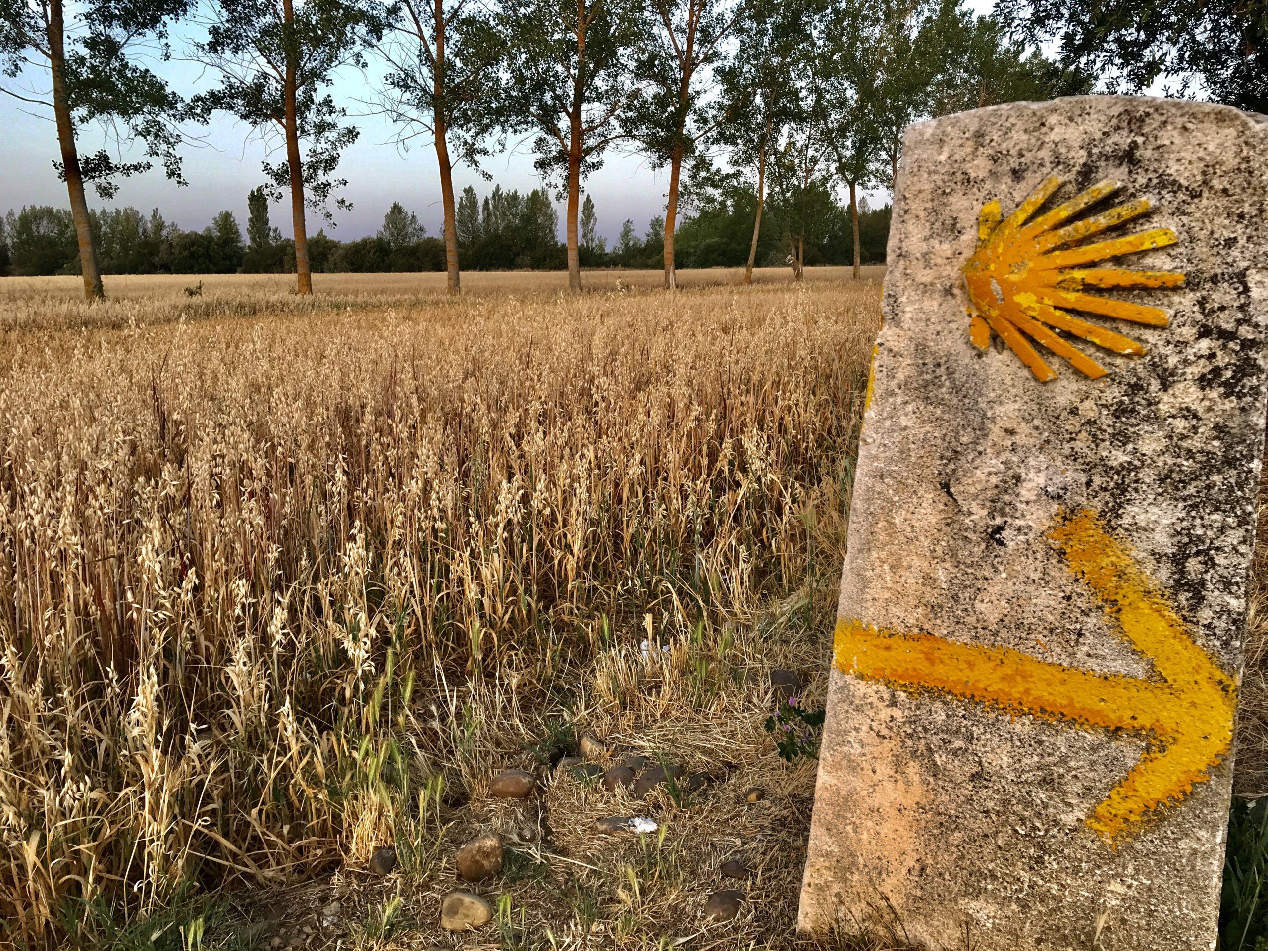 conchiglia e freccia gialla ad indicare la strada